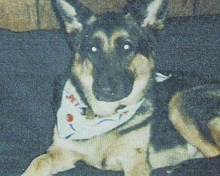Gannon,above, is an 8-year-old German shepherd, missing in Struthers. Owner Sam Vona and his family fear that Gannon, who has a collar with identification tags, has been stolen. .