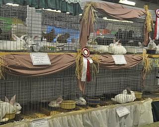 The Canfield Fair on Thursday, September 2, 2010.
