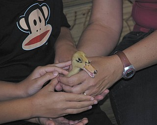 Tyler Kadivar of Bradenton, Fla., helps hold a duckling. Tyler is the grandson of Bob and Joan Stroh of Poland.