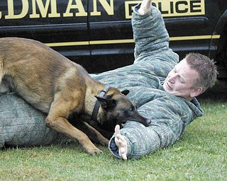 Eros, a Belgian malinois, subdues Martin Kreeft, a member of the Royal Dutch Police Dog Association, during training at Shallow Creek Kennels Inc. in Sharpsville, Pa. Eros will be on patrol with Boardman police officers by mid-October.