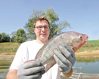 Shane Conti of Leetonia shows off one of the many tilapia at High Point Farm. Conti, who has been in business three years, says the tilapia were more plentiful and bigger this year because of higher temperatures. He also raises prawns at the Leetonia business.