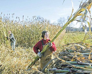 Katie Rea tosses a stalk of sorghum onto a wagon as her brother John Rea harvests the crop on their family's Salem Twp. farm.