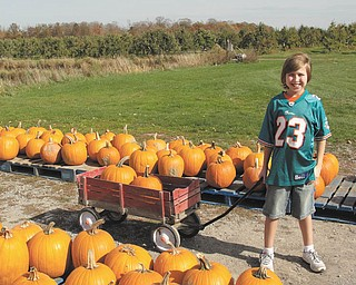 Robert Fay picked a beautiful day to pick out his favorite pumpkins.