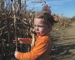 Lilyanah Miller, 22 months, takes a break in a cornfield at Country Side Pumpkin Patch on Route 224.
