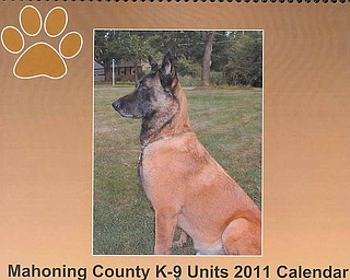 Kaz, police dog for Beaver Township, is one of several featured in the Mahoning County K-9 Units 2011 Calendar. The calendars cost $15, and proceeds will benefit several local canine units.