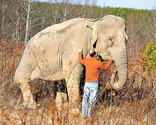 This Dec. 22, 2010 photo shows Elephant Sanctuary co-founder Scott Blais visiting with Shirley, one of the older elephants at the facility in Hohenwald, Tenn. An unexpected management change and a lawsuit might give the world a better glimpse of the refuge for elephants that have spent much of their lives in zoos and circuses.