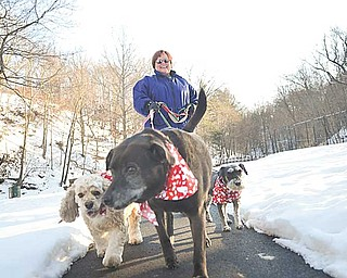 Susan Kondos walks her three dogs at Yellow Creek Park in Struthers on Thursday afternoon. Kondos, a self-proclaimed dog lover, said she's excited for the Mill Creek MetroParks' new membership program MetroMutts, which invites residents and their dogs into the MetroParks for throughout the year.
