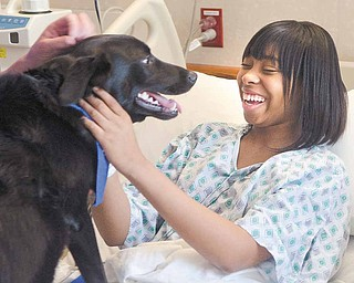 Delyon Jordan, a senior at Austintown Fitch High School, has a big smile for Jack, a therapy dog and a member of Akron Children's Hospital of the Mahoning Valley's new Doggie Brigade. Delyon, 17, is being treated for sickle-cell anemia.