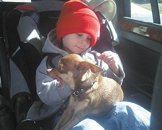 AJ Holtzman, 2 1/2 years old, likes to take his dog Nino along for car rides. And Nino likes to ride on AJ's lap! His parents are Allen and Melinda Holtzman of Charlotte, N.C., formerly of Poland.