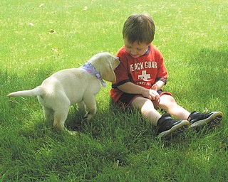 Finn O'Hara of Hubbard plays with Scout, a Labrador puppy.