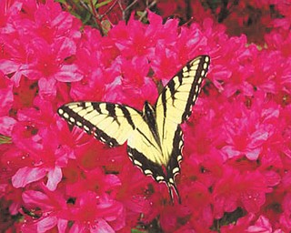 Marie Weaver of North Carolina sent in this photo of spring flowers and a butterfly.