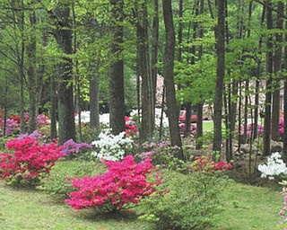 Marie Weaver of North Carolina sent in this photo of trees and spring blossoms.