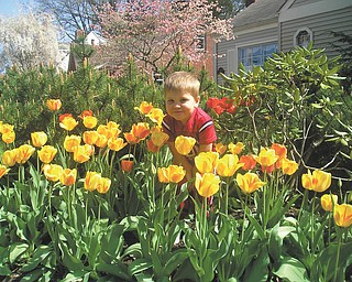 Jackson Spin, 2, of Boardman, enjoyed the neighbor's tulips on a warm day in April of last year. Photo sent in by his mother, Connie Spin.