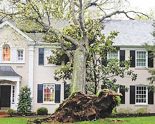 A tree lies on a house on Creveling Lane in Mount Lookout, uprooted by the overnight storms, Wednesday, April 20, 2011, in Cincinnati.
