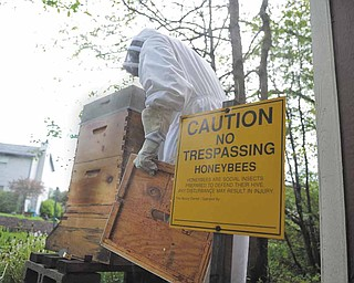 Alan Eggleston of Cortland checks on the honeybee hives in his backyard. Eggleston, president of the Trumbull County Beekeepers Association, has kept hives as a hobby for the past eight years.