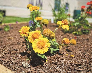 Flowers bloom in the courtyard garden at Volney Rogers Middle School on Youngstown's West Side. Students planted the garden to memorialize Volney Rogers,  who founded Mill Creek Park.