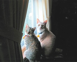 Edna and Barney are both 2 years old. They were adopted from Angels for Animals by Lee and Barb Yaist of Boardman.