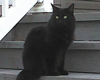 My name is Hershey. I came to my family in June 2008. I was a drop-off and also a very wild stray kitten, but with lots of love, patience and care, I became a wonderful kitty. I am still afraid of humans, but I love my big sisters, Muffie and Harlie. — Submitted by April Morris Prest of Youngstown