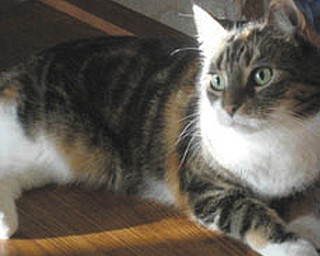 This is my kitty Abigail. She adopted me in June 1997, and celebrated her 14th birthday in April. I think she's the prettiest girl in the world, but I must admit, I'm a little biased! — Submitted by Darlene & Roy Reese of Canfield
