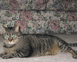Amber is 11 years old and was adopted from Second Chance Animal Rescue in 2000 by Becky Backur of Austintown.