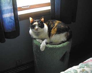 Angel was adopted from Angels for Animals about 9 or 10 years ago by Dave and Wendy Billock of Poland. They say she's such a beautiful cat and when you pet her she purrs so loud. They're so happy she's a part of their family.