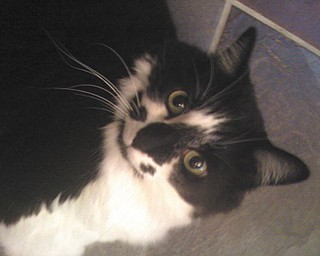 Sissy was adopted in September 1999 from Animal Appeal by Joe and Patty Yank of Boardman.