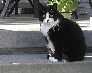 """Minnie is 10 years old and was adopted by Carlie and Catheline of Canfield from a shelter where Carlie volunteered in 2002. She was once very shy, introverted little girl, but look at her now —  pampered and adored by her forever family! She looks like she's posing for the next issue of """"Glam-purr"""" Magazine!"""