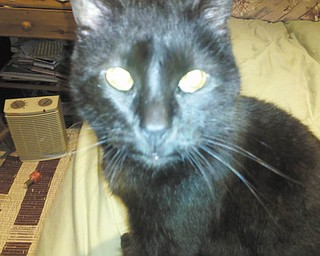 This is Shadow, adopted from a shelter at 6 months old in February 1994. That is not a typo — Shadow will turn 18 this year! — Submitted by Christy Ball of Alliance