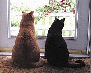 George and Patricia Hughes of Boardman adopted Geoffrey, the orange tabby on the left, and Samantha in 2000 from Angels for Animals.