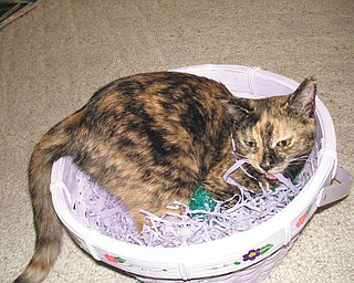 Reese was adopted from TNR of Warren in October 2009. She was 5 months old at the time of this picture. — Submitted by Tracey DeProfio of Mineral Ridge