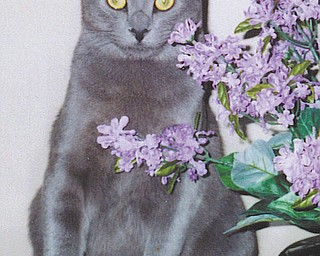 Mowie is a 6-year-old who looks like a Russian Blue, complete with vivid green eyes, except that he is a very large cat! He was adopted from Angels for Animals in 2005. After having dogs for 42 years, Bill and Barb Cardarelli of Struthers say that their cat is a real joy!