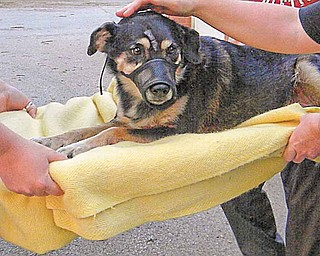 Halo is given medical attention. She was treated the night of May 31 after being hit by a car about 24 hours earlier.