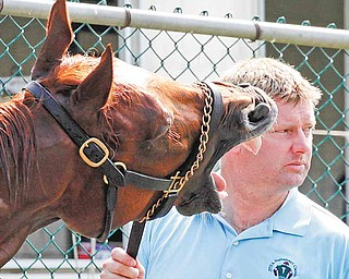 Animal Kingdom yawns during his bath while being held by assistant trainer David Rock, Friday, June 10, 2011 at Belmont Park in Elmont, N.Y. Animal Kingdom, winner of the Kentucky Derby, is entered in Saturday's Belmont Stakes. (AP Photo/Mark Lennihan)