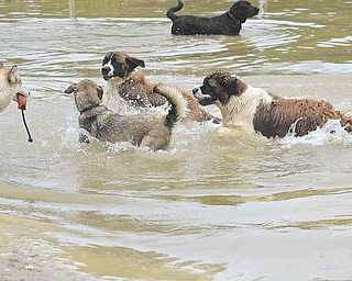 Dogs play in their own beach area at the Mosquito Lake Dog Park during the second annual Doggie Days event Sunday.
