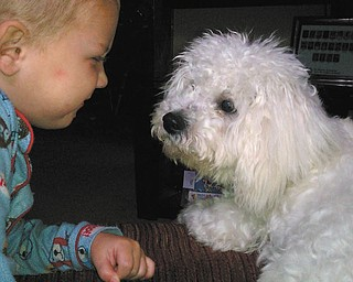 Peanut, a 1-year-old Bichon Frise who was adopted May 22, is playing with Emery, 2.