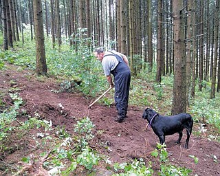 "Paul Dostie, a retired investigator with the Mammoth Lake, Calif., Police Department, and Buster, the cadaver dog he trained, search a Belgium hillside where a B-26 bomber crashed with its crew during the Battle of the Bulge in World War II. Buster ""alerted"" to multiple places on the hill."
