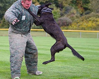 Martin Kreeft, a member of the Royal Dutch Police Dog Association, trains with a Dutch shepherd police dog named Sumo at the Field of Dreams in Boardman. The facility off McClurg Road was used Thursday and will be used today for training sessions.