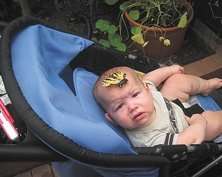 Sammy Jackson was 7 months old when he visited the Butterfly Garden at the Botanical Gardens in Alliance this past summer. He is the son of Sam and Lisa Jackson of Boardman.