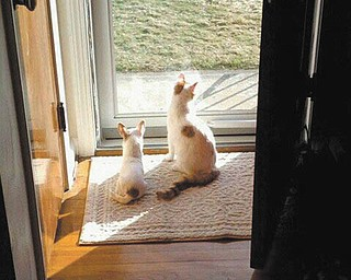 Lisa Cardona sent this picture of Alice (left) and K.C. (right) enjoying the sunshine. She says they are best friends!