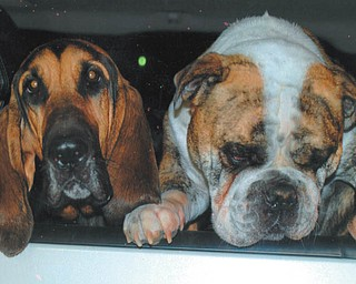 Lana Van Auker of Canfield grabbed a shot of these two dogs at the Canfield Dairy Queen.