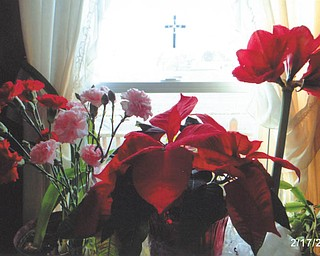 "Mary Cavanaugh of Columbiana says, ""God even provides beautiful red flowers in the winter for us to enjoy."""