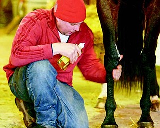 Working with the horse's legs is a constant and daily work for Andy Rickert of Berlin Center as he rubs down a horse with liniment and alcohol before wrapping the legs after a workout.