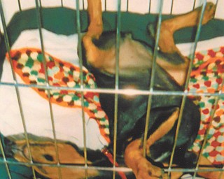 Doxie Damico of Youngstown sent in this photo of her dog Chloe, who, as a puppy, always slept in her kennel with her paws in the air, and always made her owner laugh.