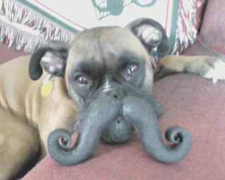 "Gia Marie, a usually very energetic boxer, calmly ""agreed"" to let her picture be taken with one of her favorite toys. Photo submitted by Barbara Kukla of Boardman."