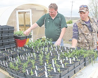 Bob Neapolitan, left, and Frank Augustine, owners of Nature's Wonders Greenhouse on West Western Reserve Road look over their array of plants from around the world. The greenhouse will open to the public May 10.