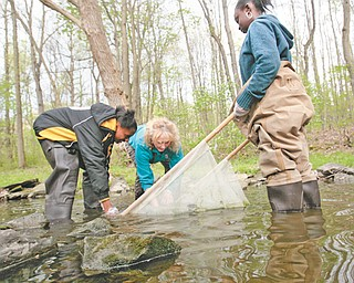 Using waders, their hands and a net, Kathleen Vrable-Bryan, center, administrator of Mahoning Soil and Water Conservation District, helps Marlana Fields, left, and Milasia Lewis, both students at Volney Rogers Middle School, collect small, bottom-dwelling organisms to test the water quality of the Ax Factory Run adjacent to the school.