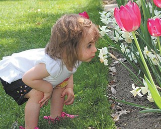 Sophia Sicilia Testa, 16 months, is smelling the flowers at Mill Creek Park's flower garden while on a family outing. She is the daughter Angela & Michael Testa of Boardman. Photo was taken by her nanny, Brittany Schiffhauer.