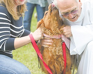 Father John Wigle, retired associate pastor of St. James Episcopal Church in Boardman, blesses Brandy,
