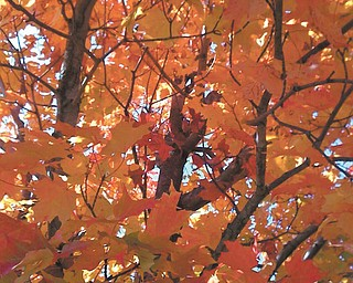 Jennifer McNair sent in this colorful shot of fall leaves at West Branch Reservoir.