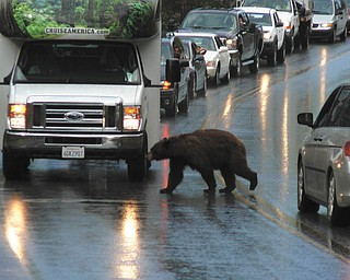 What's that slowing down the traffic at Yellowstone National Park? Oh. Photo by Nick and Andrea Gentile.